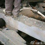 【China moral】 Stepping on earthquake victim in Sichuan http://t.co/8efd99XXzn #Torrance #Culvercity #Harbor