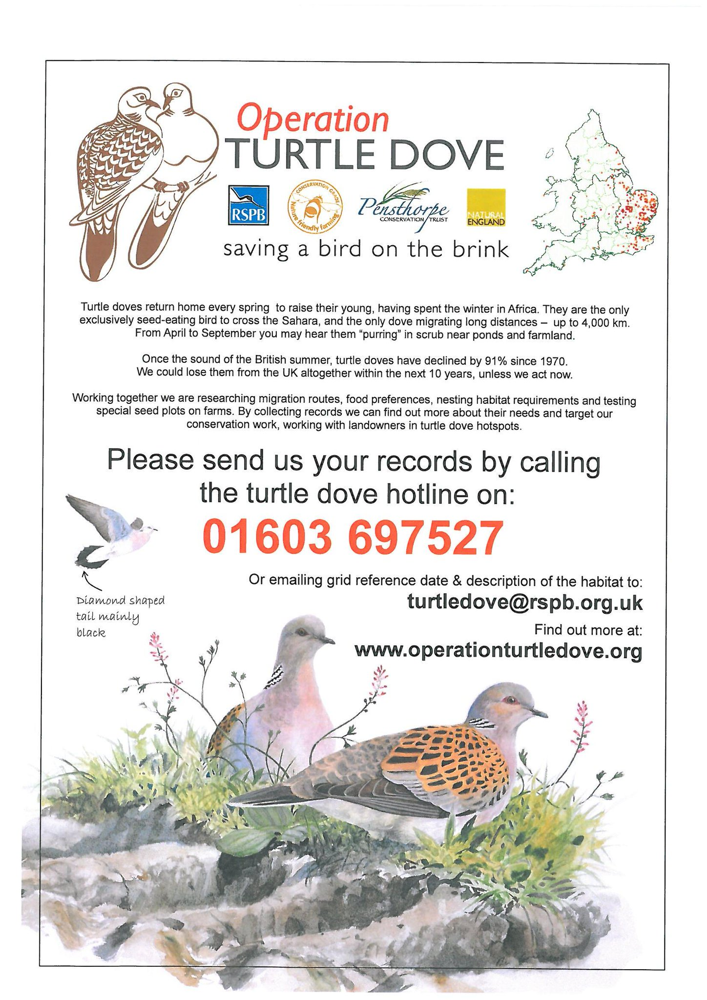 RT @Pensthorpe: Can you help us in the race to save the Turtle Dove? @Natures_Voice @naturefriendly @NaturalEngland http://t.co/EaufauWZ2c