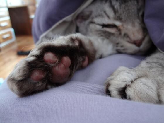 You plant these magic Toe Beans in your garden, and who KNOWS what will sprout up! http://t.co/PpeC7SdEyG