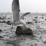 [PHOTO] Swoop in for the perfect shot with a Samsung NX300 camera.