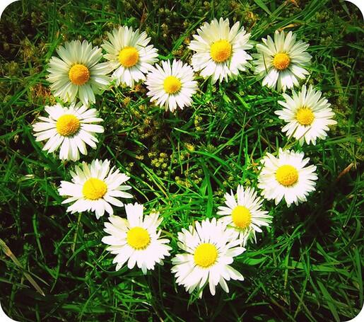 #ImABigFanOf Daisies :) they're my fav flower. simple & lovely. http://t.co/e3hRYnGGbs