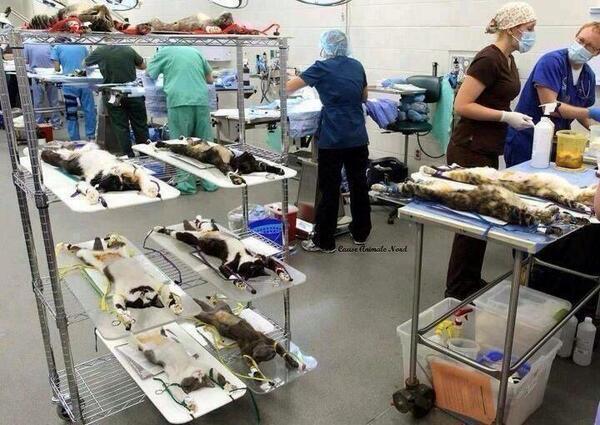 """T.C Ebru Destan İnan (@ebrudestaninan): """"@harikaresimler: Hayvan deneylerine hayır diyorsan, Retweet. http://t.co/gr0Srex2Fj"""""""