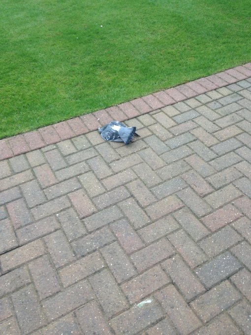 "A pigeon just hit my window… and is now just lying there… <a class=""linkify"" href=""http://t.co/70QZjlKAi7"" rel=""nofollow"" target=""_blank"">http://t.co/70QZjlKAi7</a>"