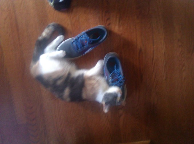"My cat is in heat and keeps molesting a pair of my shoes... not sure how to feel... <a class=""linkify"" href=""http://t.co/07iII1QspD"" rel=""nofollow"" target=""_blank"">http://t.co/07iII1QspD</a>"