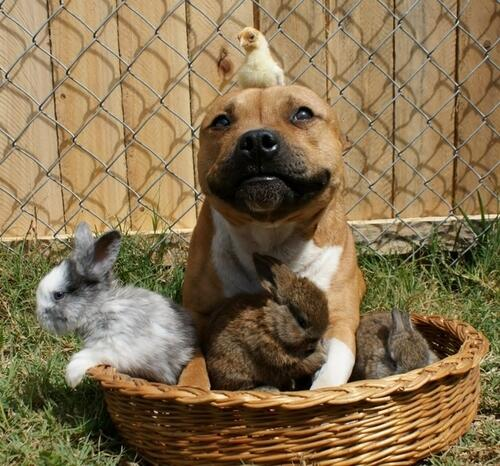 Dog, chick, bunnies. http://t.co/iYilYwjc0y