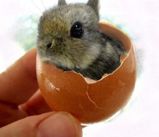 Tiny bunny, in an egg-shell. http://t.co/9fXH76uJWi