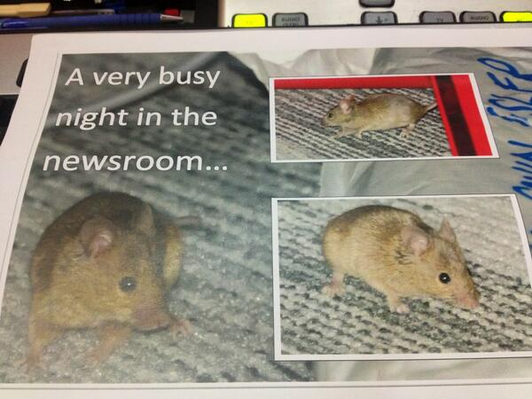 Arrive in Newsroom to find it's been a night shift of Mouse watching. @jasonKnews has photographic evidence : o http://t.co/k7hN2Tna1P