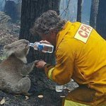 RT @takiafaridah: A firefighter helping a koala:-)