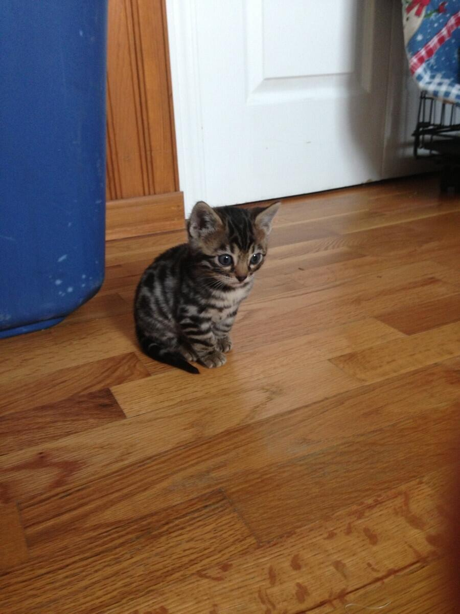 Kitten, perplexed by hardwood floors. http://t.co/9lbuOFtEaZ
