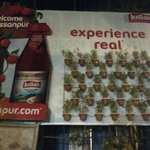 Hoarding dat caught my attention. Experience real- n they actually had real plants thr..wondering hw they water them!