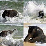 RT @ThatsEarth: Baby Elephant Playing on the Beach