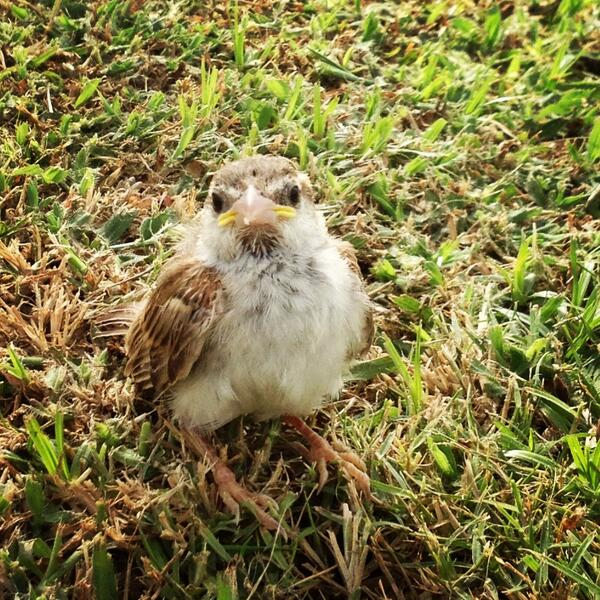 Meet my fascinating 10am appointment! #abudhabi #uae #nature http://t.co/v1LutMgZYQ