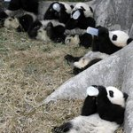 Theres this great new bar in town called Panda Bar. Check it out! http://t.co/bmv60ZvJVK