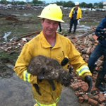 """@mikeseidel: This Moore, OK fireman just rescued this cat in the rubble right behind us. Its muddy but OK! http://t.co/WDoVIgqe9h"" awwwwwe"
