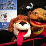 Look who stopped by to provide their support for the 2013 Cause for Paws #SPCAtelethon! Thanks Wide Open Theatre! http://t.co/d5gZrHWhHJ