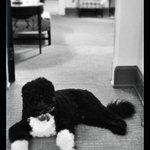 RT @petesouza Photo of Bo hanging out in the West Wing this morning http://t.co/EMpW64Iy3s
