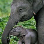 `: ) RT @EmergencyPuppy: Baby Elephant with mother. http://t.co/hPjx94MBSW
