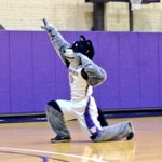 Are you Harry enough? @HarryTheHusky auditions have begun! #UDUB http://t.co/wu6stRJAKA