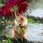 RT @ThatsEarth: Little Chipmunk's Umbrella.
