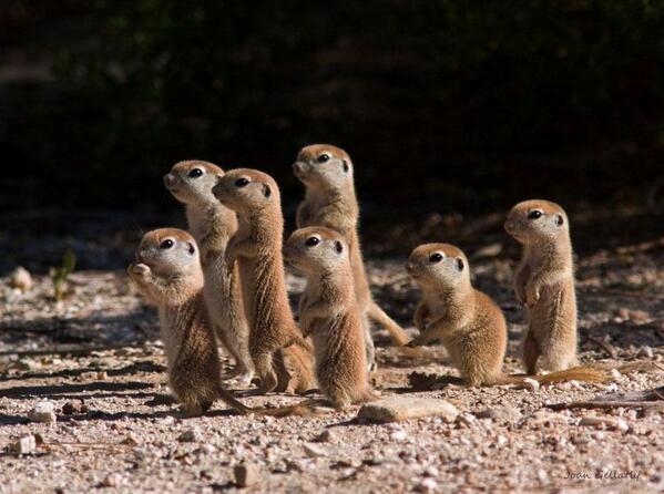 Prairie Pups http://t.co/YGjzrz5GyD