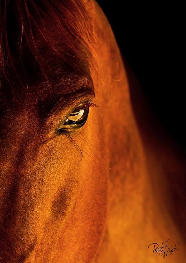 El sol brillo sus crines dejando un resplandor, cuando el ocaso esta por culminar, de aquí la leyenda del caballo. http://t.co/sUs5uhGk9u