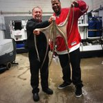 RT @espn: When Ndamukong Suh goes to @DetroitRedWings games, he gets his #octopihockeytown on -> http://t.co/xYcKh1cy14