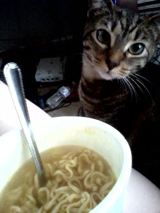 This is the face I get to stare at every time I eat noodles &lt;a class=&quot;linkify&quot; href=&quot;http://t.co/yISfgye5kx&quot; rel=&quot;nofollow&quot; target=&quot;_blank&quot;&gt;http://t.co/yISfgye5kx&lt;/a&gt;