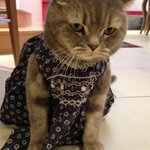 Grumpy cat in a dress RT @victoriabeckham: Happy Saturday!! Meet Earnie!!! X vb http://t.co/TSXtN9GcBZ