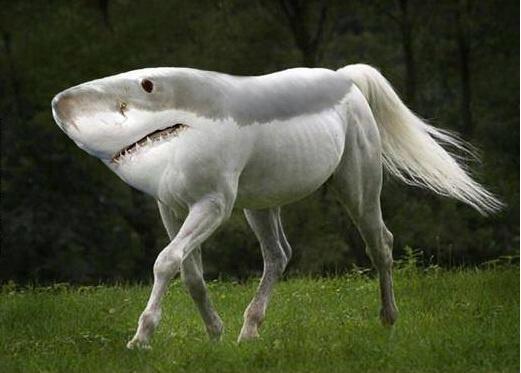 歩くサメで画像検索したらこんなんでました。 http://t.co/Q89ryDPHTf