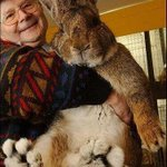 RT @ThatsEarth: Herman, the World's Biggest Bunny.