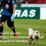 HAHAHAHAHA RT &quot;@andrelreiss: Imagem marcante mostra torcedor do Bahia em tentativa de agresso ao goleiro tricolor: http://t.co/fgi9xViGw1&quot;