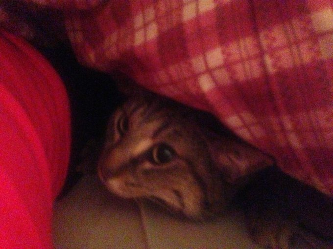 "Kitty hiding under the blanket :p <a class=""linkify"" href=""http://t.co/hhQZNevgPi"" rel=""nofollow"" target=""_blank"">http://t.co/hhQZNevgPi</a>"