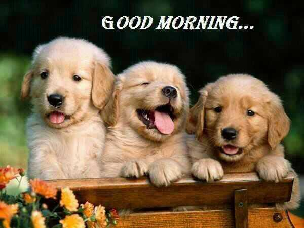 Good morning my dear friends! Have a great day! Bom dia queridos amigos! Tenham um ótimo dia! :) http://t.co/f6CkD88NDY