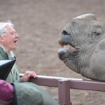 Amazing pic of our very special visitor, Sir David Attenborough, meeting Beni the one-horned #rhino yesterday! http://t.co/gNYGhmNIMp