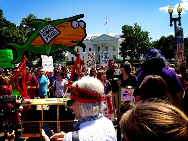 """@gmo917: Large crowd in front of #Whitehouse having speak out about #Monsanto #MarchAgainstMonsanto #MAMDC http://t.co/8AbGTF9Skg"" Awesome!"