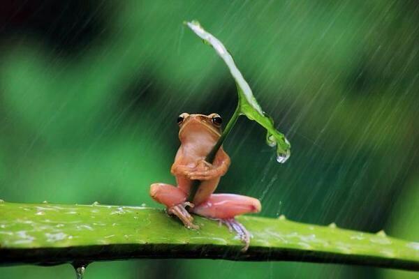 그대 가랑비 같은 사람이여 오지 않는듯  다가와 모른척하니 나는 어쩌란 말이냐 이미 내 마음까지 젖어있는데 비 -이정하 中 http://t.co/jEi3EQO33Y