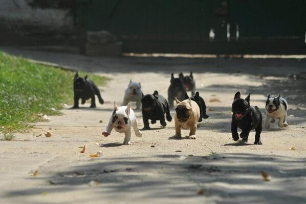 They're coming right for us! Run! http://t.co/MkPpW2gJoq