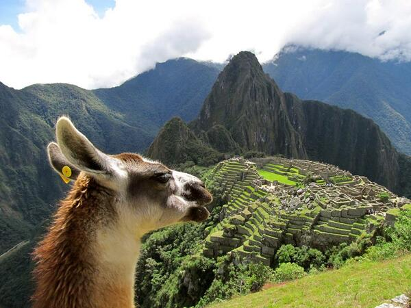 Say hi! RT @christievh: I think I got a picture of the same llama that's on the cover of your #Peru guide! : ) #lp http://t.co/J4kyV0z7Mt