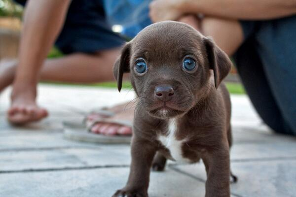 Puppy, on a sidewalk http://t.co/Fgk43AFsBX