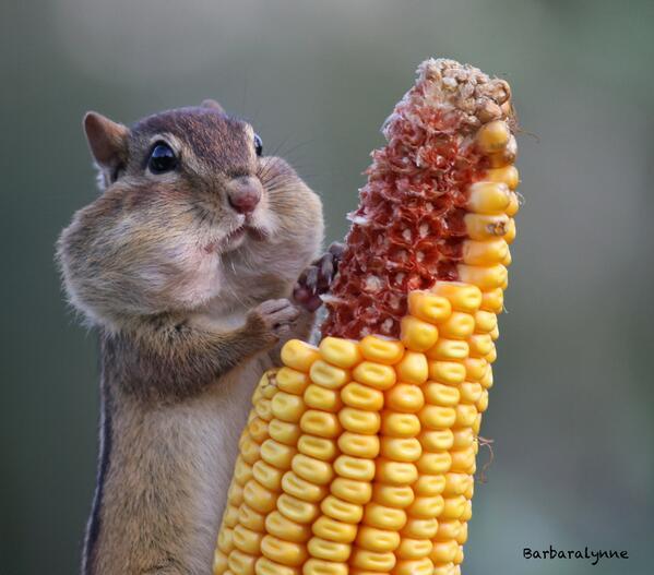 """Feelin' Cheeky"" [photo by Barb D'Arpino] http://t.co/owzZvWS3PB"