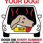 RT @Animals1st: Dogs Die In Hot Cars!! http://t.co/w0fjOe5Axy