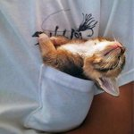 #Aww! ►The ultimate happiness: A kitten in your pocket #cute
