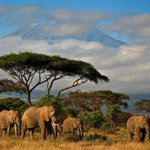 RT @ThatsEarth: A herd of elephants, a blue sky and the snow on the Kilimanjaro, Kenya http://t.co/0C8KusK3GP