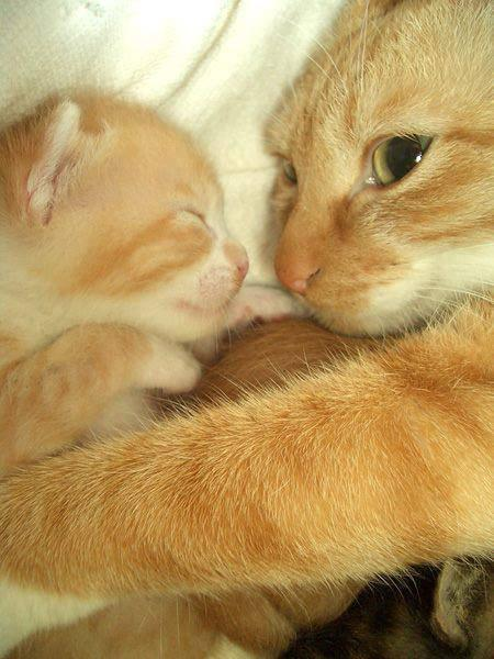 RT @awwclub: Mother and her kitten. http://t.co/4o7dsY9G8I