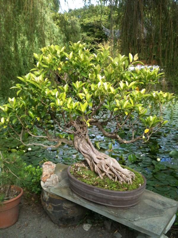 RT @rmercer68: 125 year old silent poem. Penjing .Chinese term for bonsai @vangarden http://t.co/gSsXzSqGoO