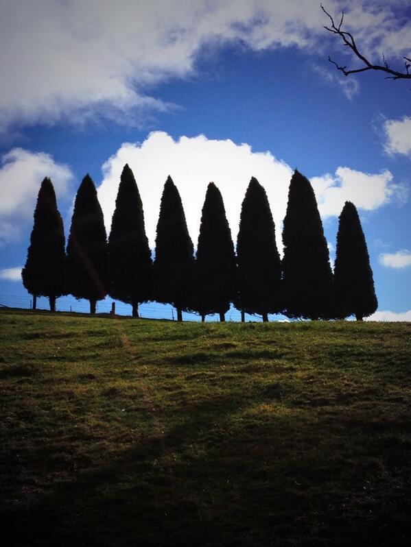 Hedge. #tweetedfarmwalk http://t.co/hrKw8WNNSo