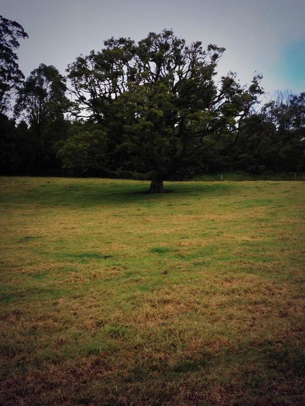 Tree. #tweetedfarmwalk @zoerose22 @LynDavey @BearishClaire http://t.co/HdP1ZgbHBx