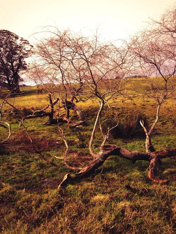 Dead tree in swamp. #tweetedfarmwalk @LynDavey @BearishClaire @zoerose22 http://t.co/wYWvyJylSd