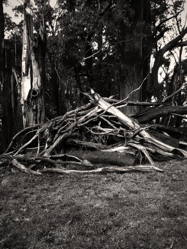 Pile of wood. #tweetedfarmwalk @LynDavey @BearishClaire @zoerose22 http://t.co/d7MnJTdBiY