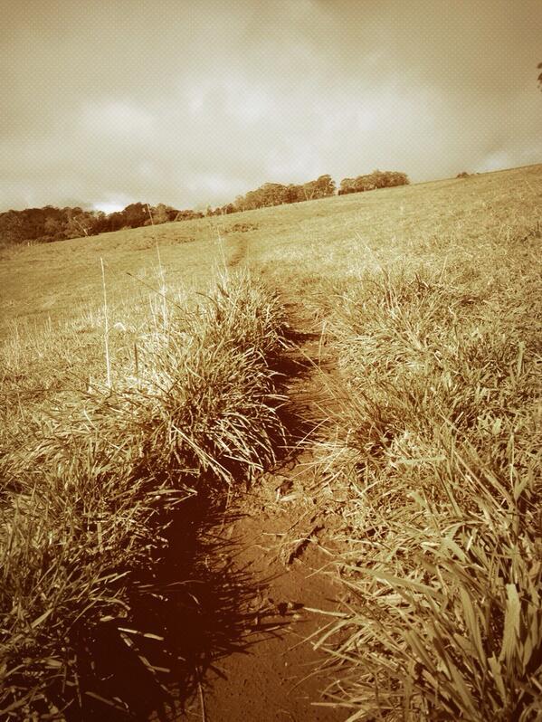 Goat track. #tweetedfarmwalk @zoerose22 @LynDavey http://t.co/EiOjgjVhS6